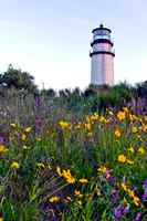 Highland Light and Flowers