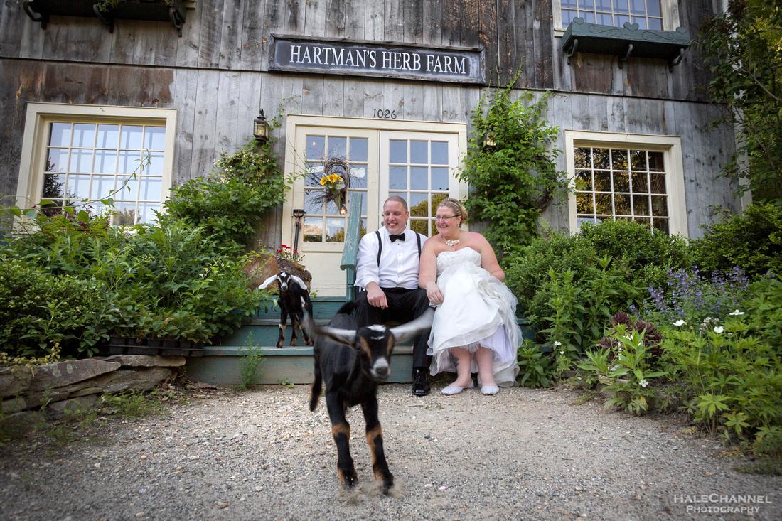 Hartman's Herb Farm Goats